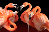 Flamingo-Quartett