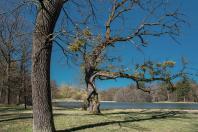 Nymphenburger Park 2