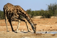 Akrobatik gegen Durst