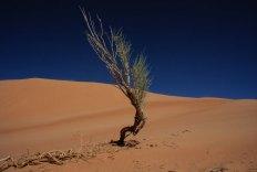 Die Wüste lebt