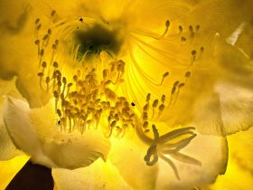Wunderwerk Blüten - Kaktus