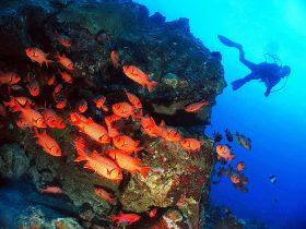 Perspektiven - unter Wasser