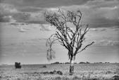 Überleben in der Serengeti