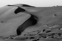 Wüstenschlange