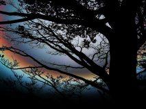 Baum am Walchensee, verfremdet