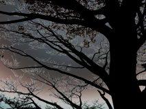 Baum am Walchensee