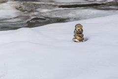 Zerberus oder Wache im Schnee